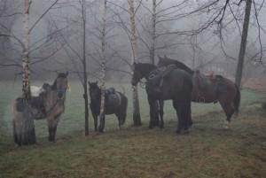 rajdowe konie w deszczu jpg