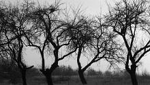 usunięcie drzewa lub krzewu z terenu nieruchomości wpisanej do rejestru zabytków